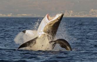 钓客搭小船勇钓鲨鱼 缠斗20分钟被拖入海 全场吓傻