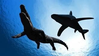 大白鯊跟蹤同體型鱷魚2分鐘 驚人下場網嚇翻