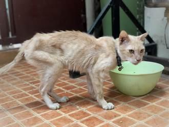 被棄養幼貓餓壞 靠互吃同伴毛充飢 獲救後露出空靈本尊