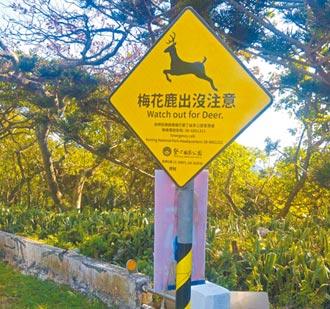 車禍頻傳 墾管處警示鹿出沒注意