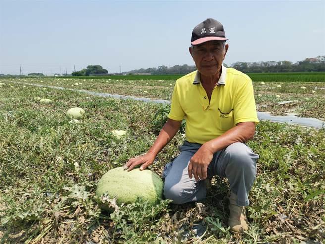 化瓜農胡國興長年於瓜田附近路旁擺攤,以1斤10元產地價回饋給消費者。(劉秀芬攝)
