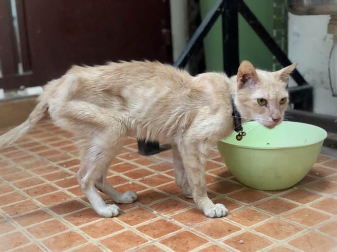 幼貓被棄養餓翻,只能靠吃同伴的貓毛充飢,獲救後變身絕美貓。(示意圖/達志影像)