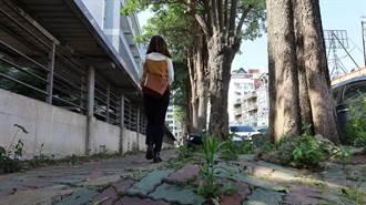 竹縣改善道路人行環境 遍及10鄉鎮市