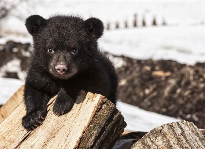 小熊們自己開門進到療養院裡,人性化的動作讓不少人看傻眼。(示意圖/達志影像)