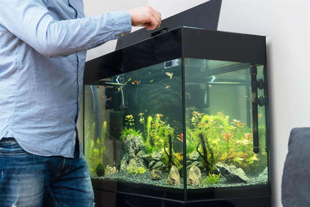 居家風水中要特別注意廁所方位、鏡子擺設、臥室植栽、魚缸位置、藝術品種類。(示意圖/shutterstock)