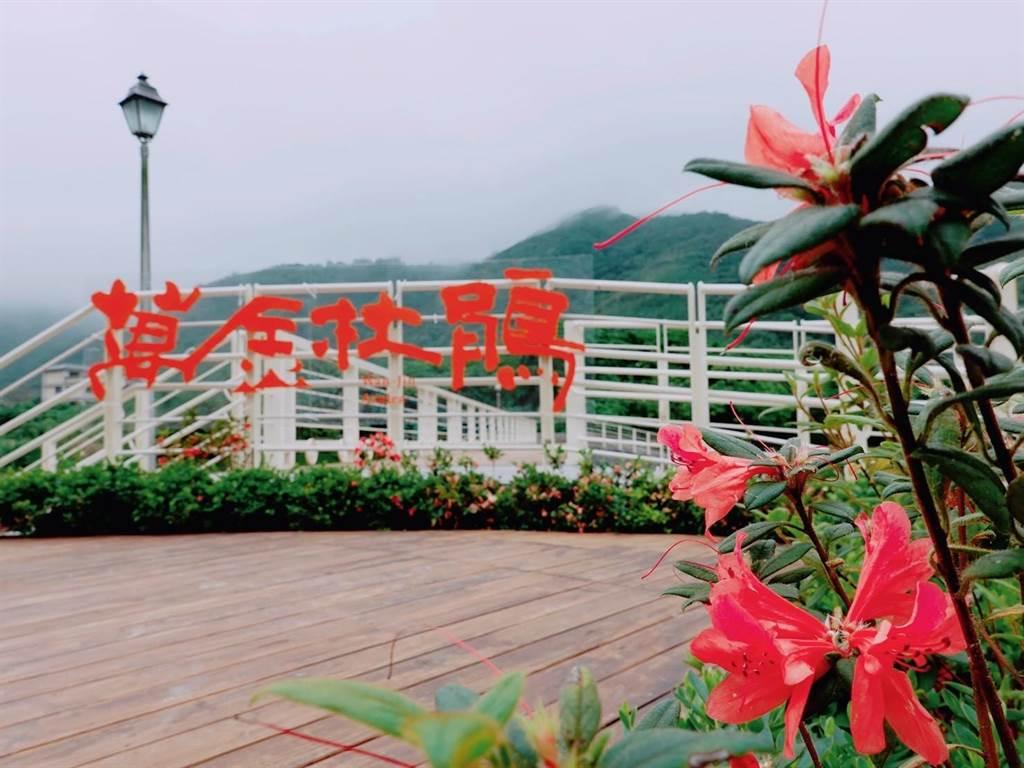 萬里觀光公園打造萬金杜鵑基地。(新北市綠美化環境景觀處提供)