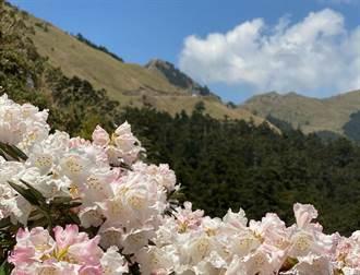 台灣百岳「破蛋」解鎖 不妨從這三座山峰開始