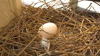 陽台有鳥築巢向朋友炫耀 3個月後屋主打掃見真相眼神死