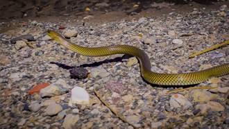海下67公尺發現怪海蛇 專家放大看驚:牠消失23年
