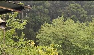 溪頭下雨了 遊客淋雨登山嗨翻:雨再下大一點