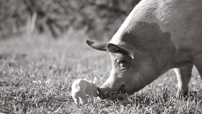 电影拍出动物们的内心情感,发人省思。(海鹏影业提供)