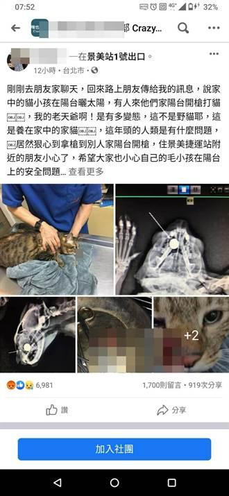 猫在围墙被枪击 钢珠卡头骨送医救治