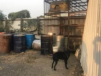 養狗不當遭查竟全部棄養 嘉縣家畜所開罰11萬3000元