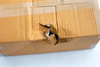 童網購小魚拆包裹卻嚇傻 盒子破大洞驚見猛獸嘴鑽出