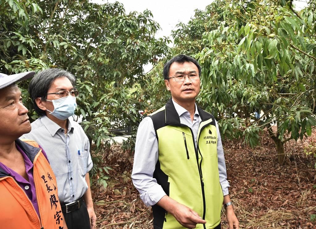 農委會主委陳吉仲(右)26日到旗山區視察荔枝園,他說,農委會將以最快速度協助農民度過難關。(林瑞益攝)