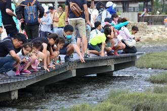 台中海線瑰寶高美溼地 生態教育親近大自然