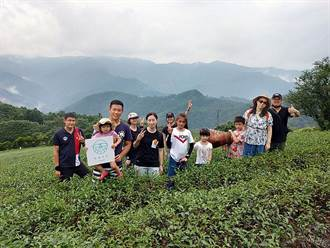 農村體驗 坪林春茶VS嵩山社區農事體驗