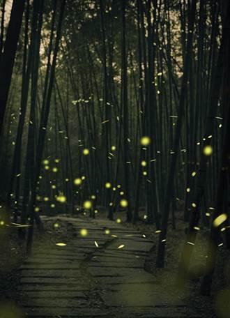 溪頭螢光派對 每夜森林音樂會