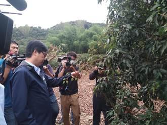 乾旱釀荔枝災損 陳其邁指示從寬認定 與農民共度難關