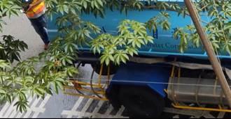 缺水期水車竟路旁倒水被轟浪費 台水澄清:水質不佳緊急排放