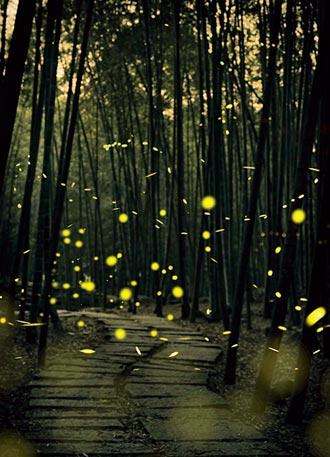 溪頭螢光派對 星空下的音樂會