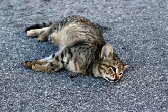 愛貓被車撞埋入土安葬 5天後變喪屍爬回家 主人嚇傻