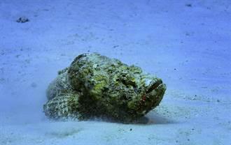 划船驚覺挖到爛泥竟長出厭世嘴 網近看嚇傻:世上最毒魚
