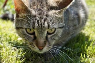寶寶伸手打招呼 貓皇秒露「奈良鹿臉」 超不屑眼神千萬人笑翻
