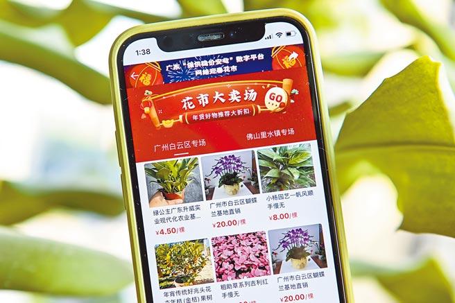 廣東省農業農村廳在廣東農產品「保供穩價安心」數字平台開設網絡迎春花市,助力年宵花產品走向電商平台。(中新社)