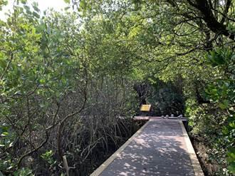北門雙春濱海棧道修復 重現忘憂森林美景