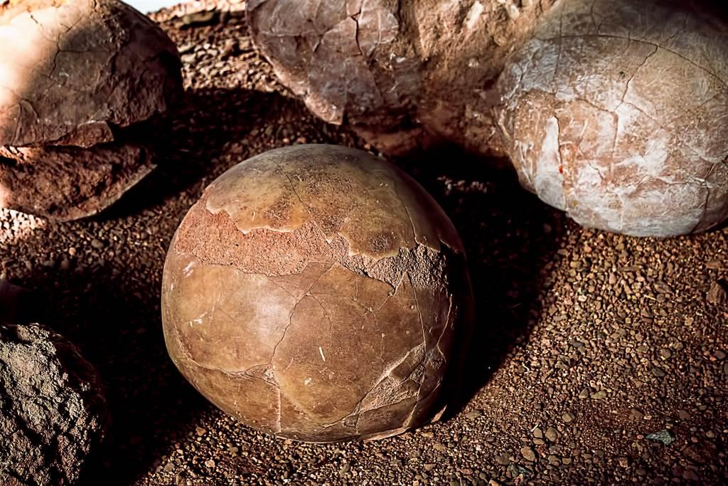 工程人員在土裡挖到「畸形恐龍蛋」,仔細一看才知道,此為產在龜殼裡的蛇蛋。(示意圖/達志影像)