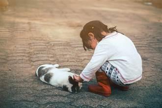 嬰兒偷溜爬到馬路上 小貓靈性舉動眾人感動:牠是天使
