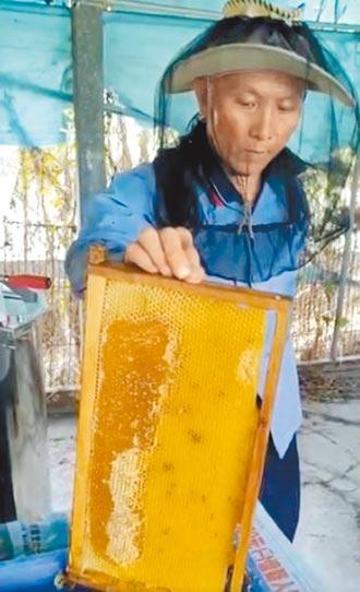 龍眼花盛開 雲嘉蜂蜜量多質高
