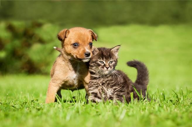 一名飼主養的狗出去散步時,發現一隻無家可歸的幼貓,便將牠帶回家,期間還擔心牠走不動,頻頻回頭查小貓的狀況。(示意圖/達志影像)