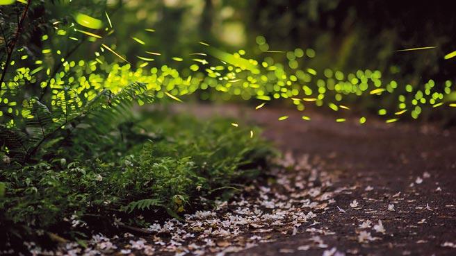 每逢5月同時可賞桐花、追螢火蟲。(東南旅遊提供)