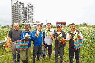 北海道牛奶玉米 竹市也吃得到