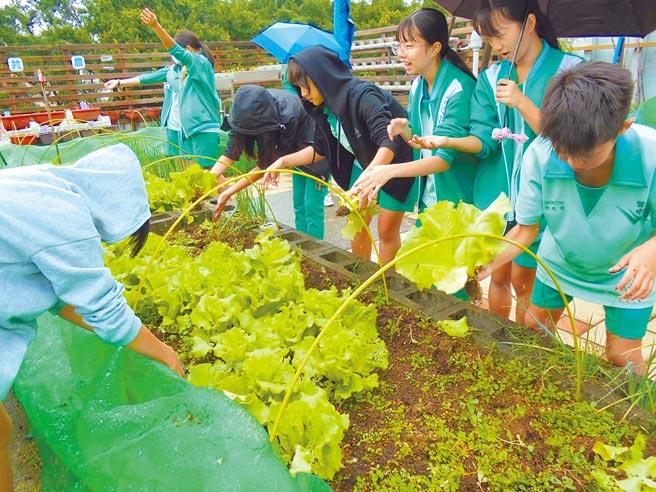 新北市鶯歌國中2011年推動食農教育,近年積極與在地國小合作,推動「食農小當家」活動,讓幼童體驗採摘,將食農教育向下扎根。(新北市鶯歌國中提供/蔡雯如新北傳真)