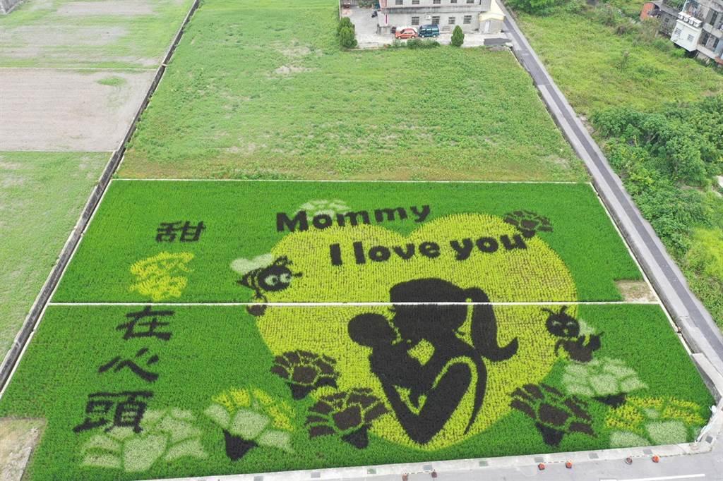 苑裡鎮農會 4日上午在愛情果園旁農田,推出今年彩繪稻田,是以母愛為主題。(苑裡鎮農會提供/謝明俊苗栗傳真)