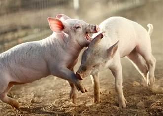 挖出國防部談國產豬2段話 楊寶楨轟:一場騙局