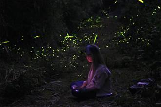比想像還多 雲林縣賞螢火蟲正是時候