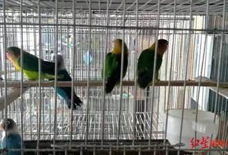第一鳥案判決 大陸將試點放寬人工養殖瀕危動物
