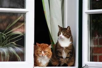 毛孩讀心術》開窗讓愛貓曬太陽 飼主打完電話見冰冷屍體淚崩