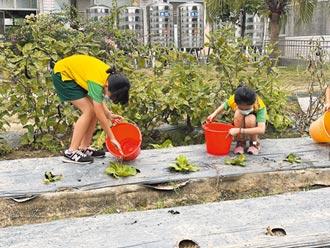 雨水撲滿奏效 台南校園農場免休耕