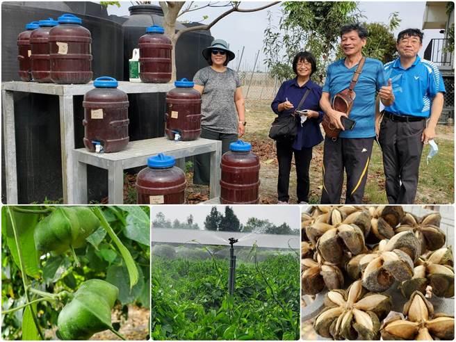 業師謝武淳以光合菌使用於印加果園效果卓著。(食品所提供)