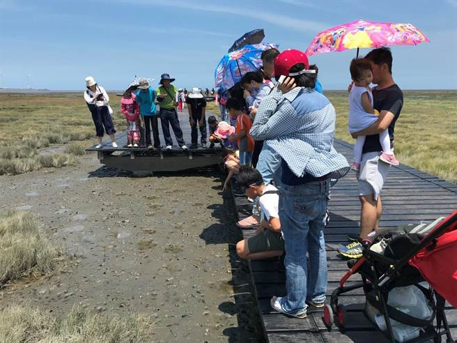 高美野生動物保護區生物多樣性生態體驗活動5月至8月共規劃8場,由協會人員解說並帶領民眾走入高美濕地。(台中市農業局提供/王文吉台中傳真)