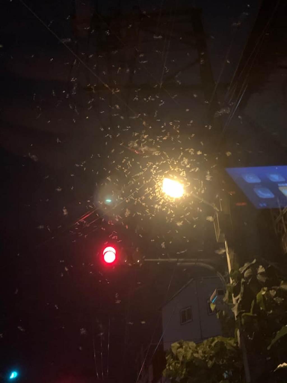白蟻大爆發盤據天空與路燈,不少民眾哀號飛進住家。(圖/翻攝自鄭明典臉書)