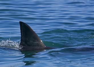 女童戲水見鯊魚滑過腳邊秒嚇逃 超驚悚瞬間全被錄