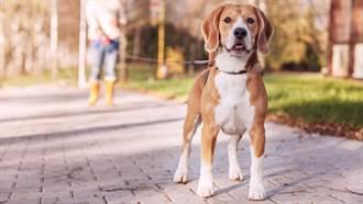 父路邊拍狗被當賊 兒PO「毛孩真實樣貌」8萬人笑翻
