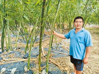 台南苦旱筍失慘 2分地只挖出2條綠竹筍