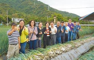 三星蔥移花蓮保種 育成量16噸